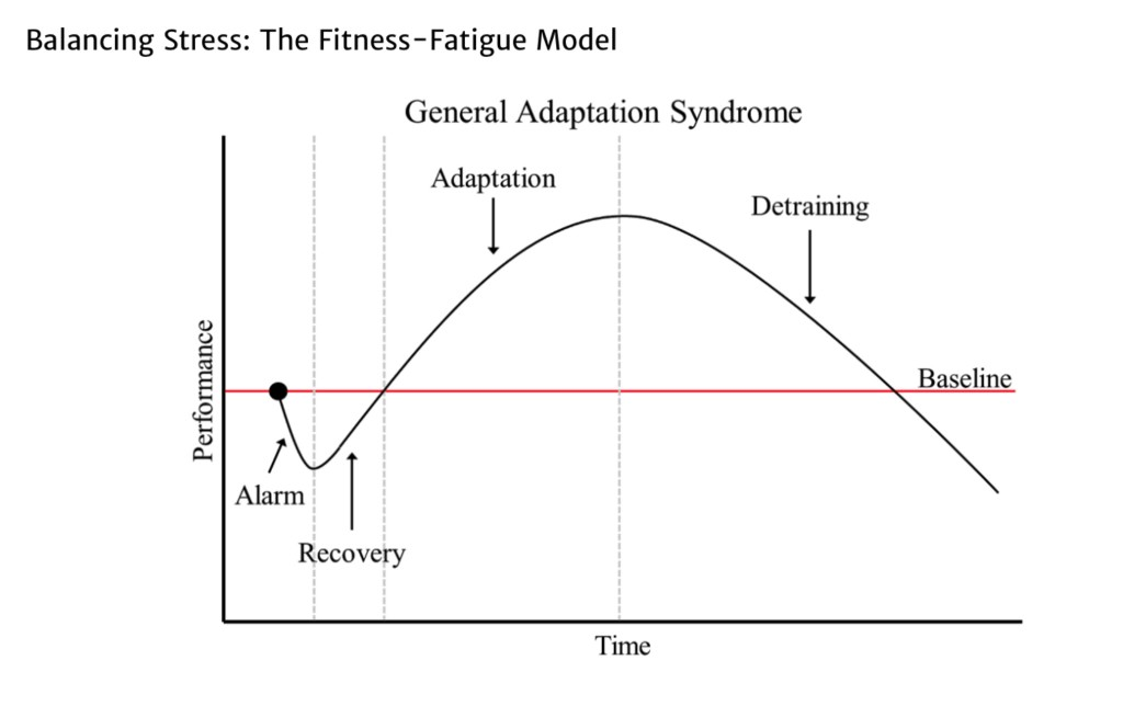 Balancing Stress The Fitness-Fatigue Model