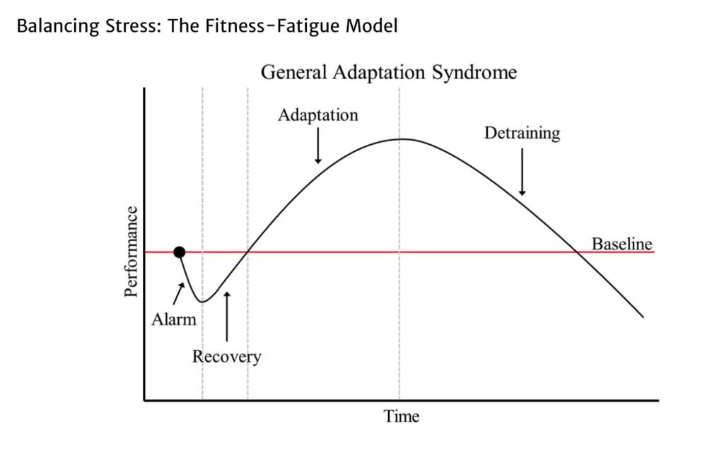 Balancing Stress The Fitness-Fatigue Model